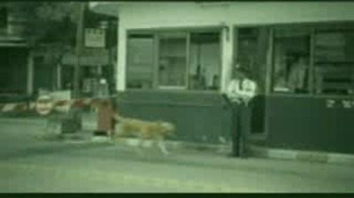 Bridgestone - Dogs