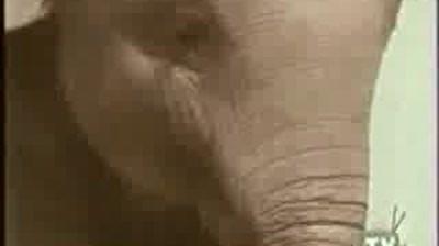 ROLO - elephant