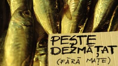Vitrina Advertising Romania - Market 2