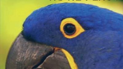 GAZETA DE CLUJ - Papagal