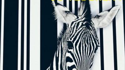 GAZETA DE CLUJ - Zebra