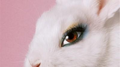 Vier Pfoten Romania - Test Bunny