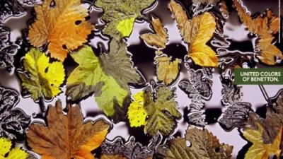Benetton - Leaves