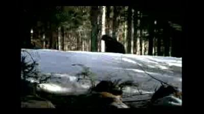 Sprite - Ursul