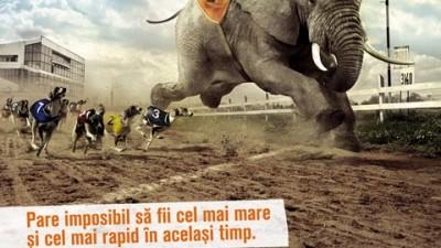 TNT - Elefantul