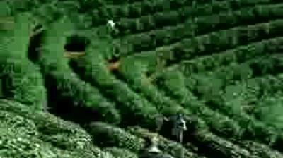 Lipton - Green