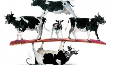 Swiss Milk - Stabilitate