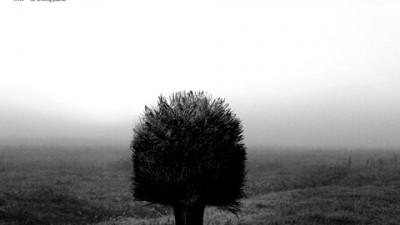 WWF - Broom 1