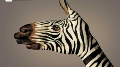 WWF - Zebra