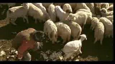 Anim'est Festival - Sheep