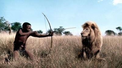 Nikon - Lion