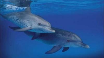 Olympus 790SW Waterproof Camera - Dolphin