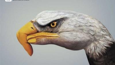 WWF - Eagle