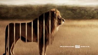 ZOO Safari - Lion (I)