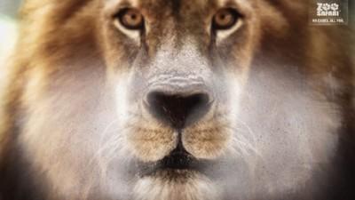 ZOO Safari - Lion (II)