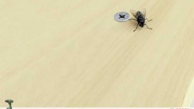 Bosch Cordless Screwdriver - Fly
