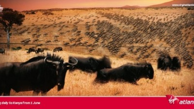 Virgin Atlantic International - Wildebeest