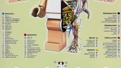 Brainobrain - Anatomy