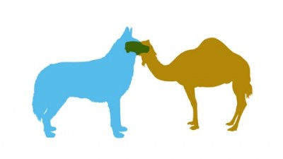 Chrysler - Husky&Camel
