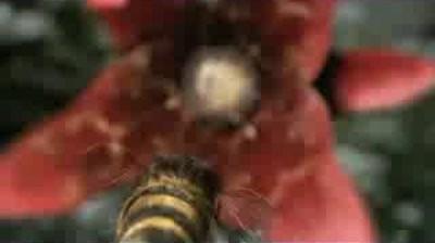Haagen Dazs - Help the Honey Bees