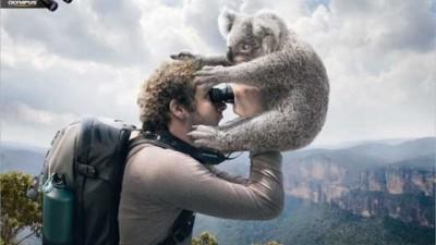 Olympus Binoculars - Koala