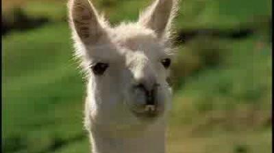 Starburst - Llama