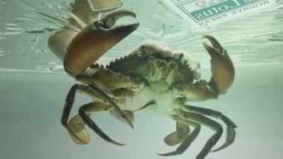 Tesco Lotus - Crab