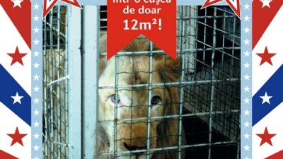 Vier Pfoten Romania - Stop it!