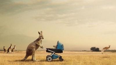 Kit Kat - Kangaroos