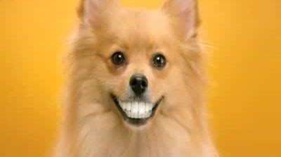 Pedigree - Doggie Dentures