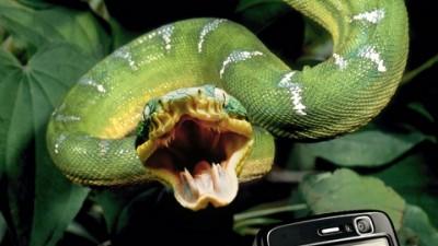 Philips V900 - Snakebite