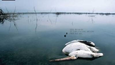 Neenah Paper - Pelican