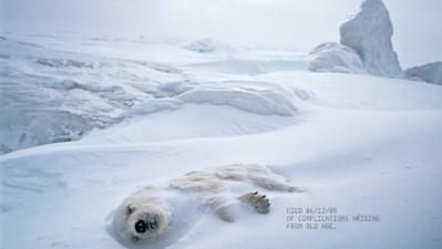 Neenah Paper - Polar Bear