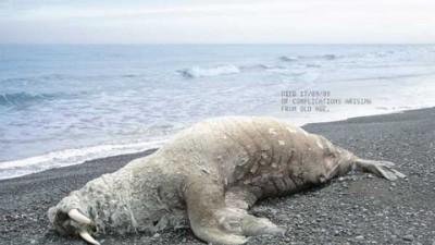 Neenah Paper - Walrus