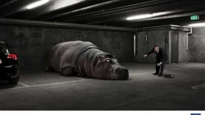 Peugeot Service - Lazy Hippo
