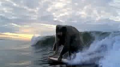 Accenture - Surfing Elephant