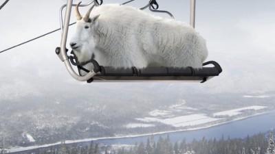 Marble Mountain - Mountain Goat