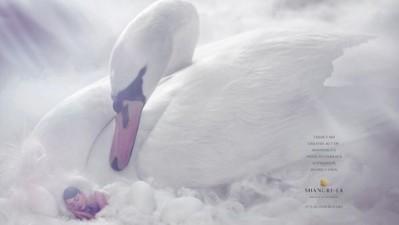 Shangri-La Resorts - Swan