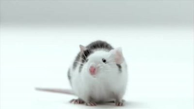 AT&T / Samsung - Mouse