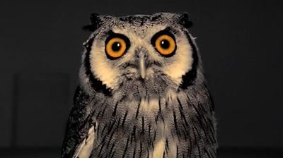 AT&T / Samsung - Owl