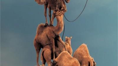 Nokia N8 - Stack up (Camel)