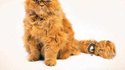Clucky Cake - Cat