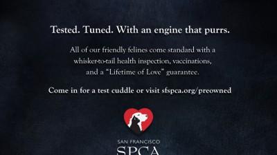 San Francisco SPCA - Certified Pre-Owned Cat