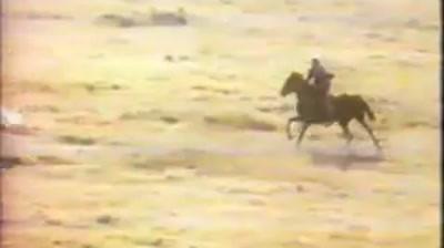 Marlboro - Marlboro Country Wild Stalion