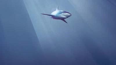 Shark Alliance - Shark in the sky