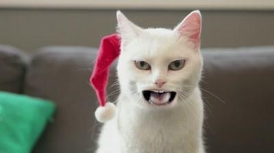 Wal-Mart - Yodeling Cat