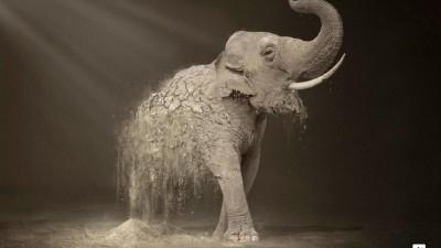 WWF Desertification - Elephant