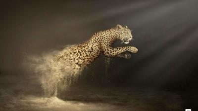 WWF Desertification - Leopard