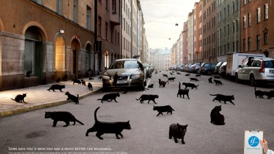 If Car Insurance - Black cats