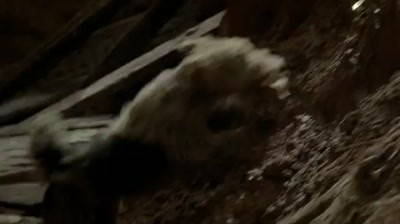 Lotto - Lucky dog